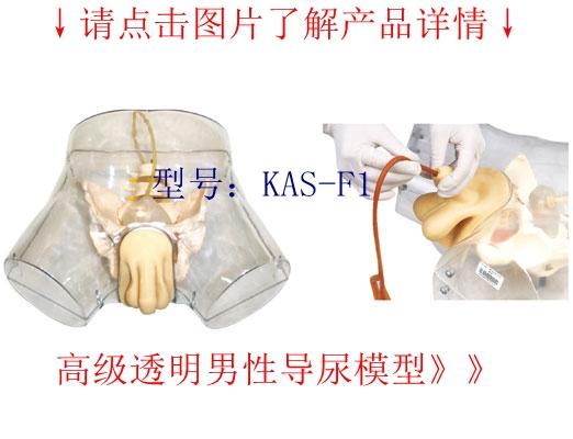 透明男性导尿模型使用方法